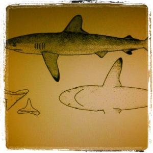 La stanchezza dello squalo